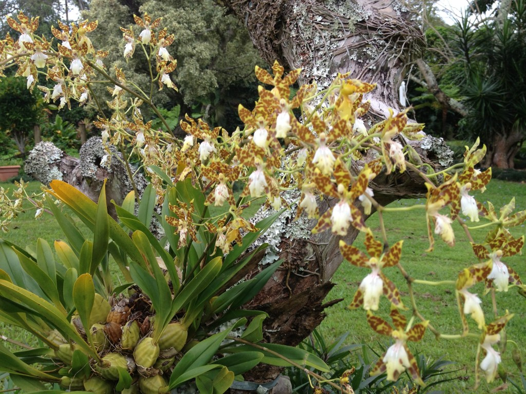 Mounting Orchids In A Tree