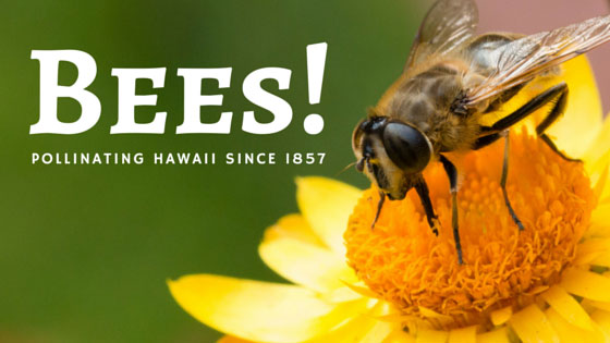 Bees have been pollinating in Hawaii since 1857