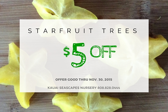 Starfruit Trees For Sale at Kauai Seascapes Nursery
