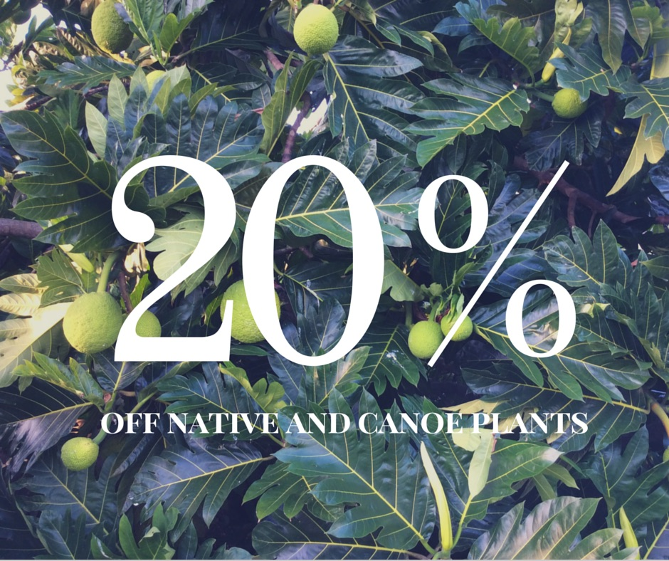 20% off Native and Canoe PLants