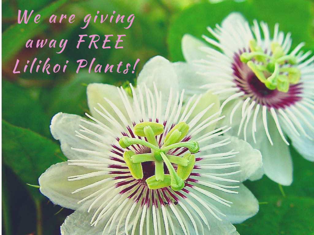 We are giving away FREE Lilikoi Plants! (1)