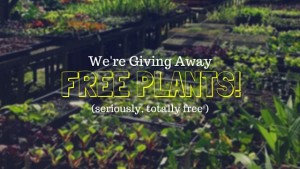 We're Giving Away Free Plants!