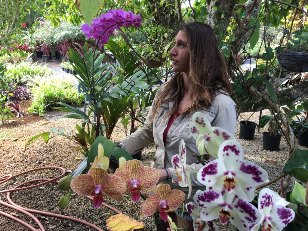 In love with orchids